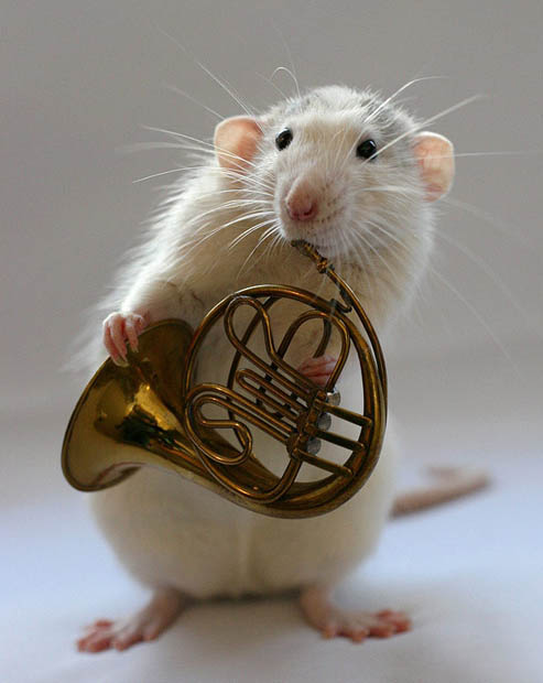 french_horn_with_mouse.jpg