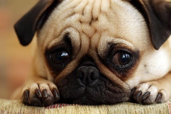 Sad-Dog.jpg
