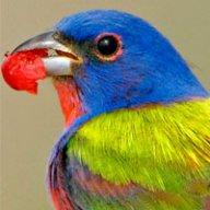 Bird90