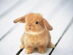 Bunnyninja