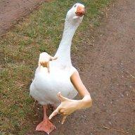 _Goose